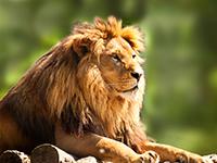 גן החיות התנכי ירושלים - חוויה לכל המשפחה