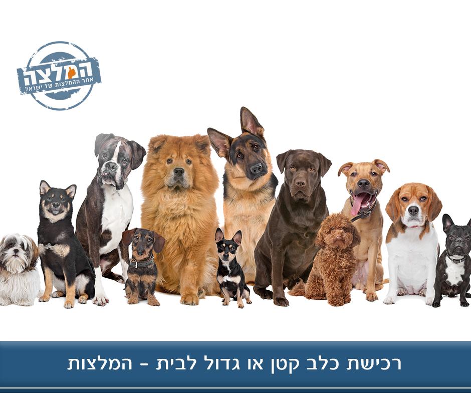 רכישת כלב קטן או גדול לבית – המלצות