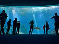 המצפה התת ימי באילת - אטרקציה לילדים
