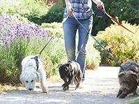 טיפים לבחירת פנסיון כלבים