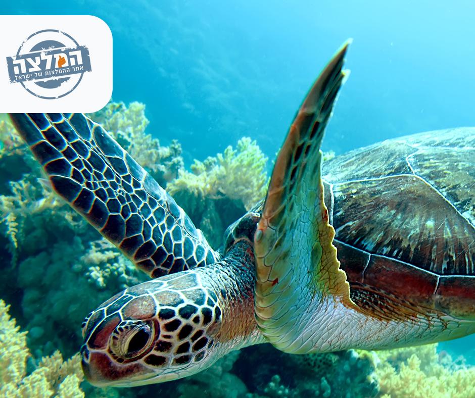 טיולים בארץ - המרכז להצלת צבי ים במכמורת