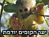 יער הקופים יודפת - כרטיס עסק פרימיום