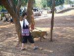 מקדש הנמרים תאילנד