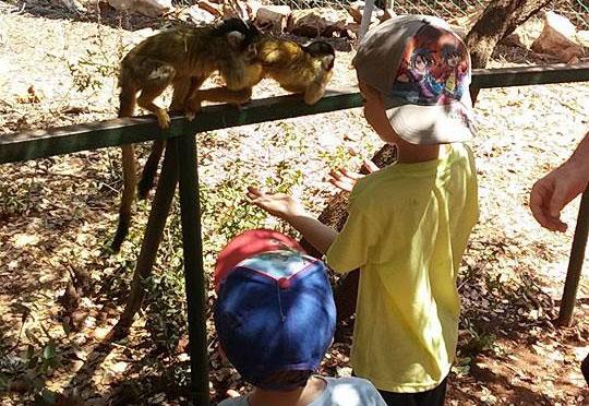 יער הקופים ביודפת