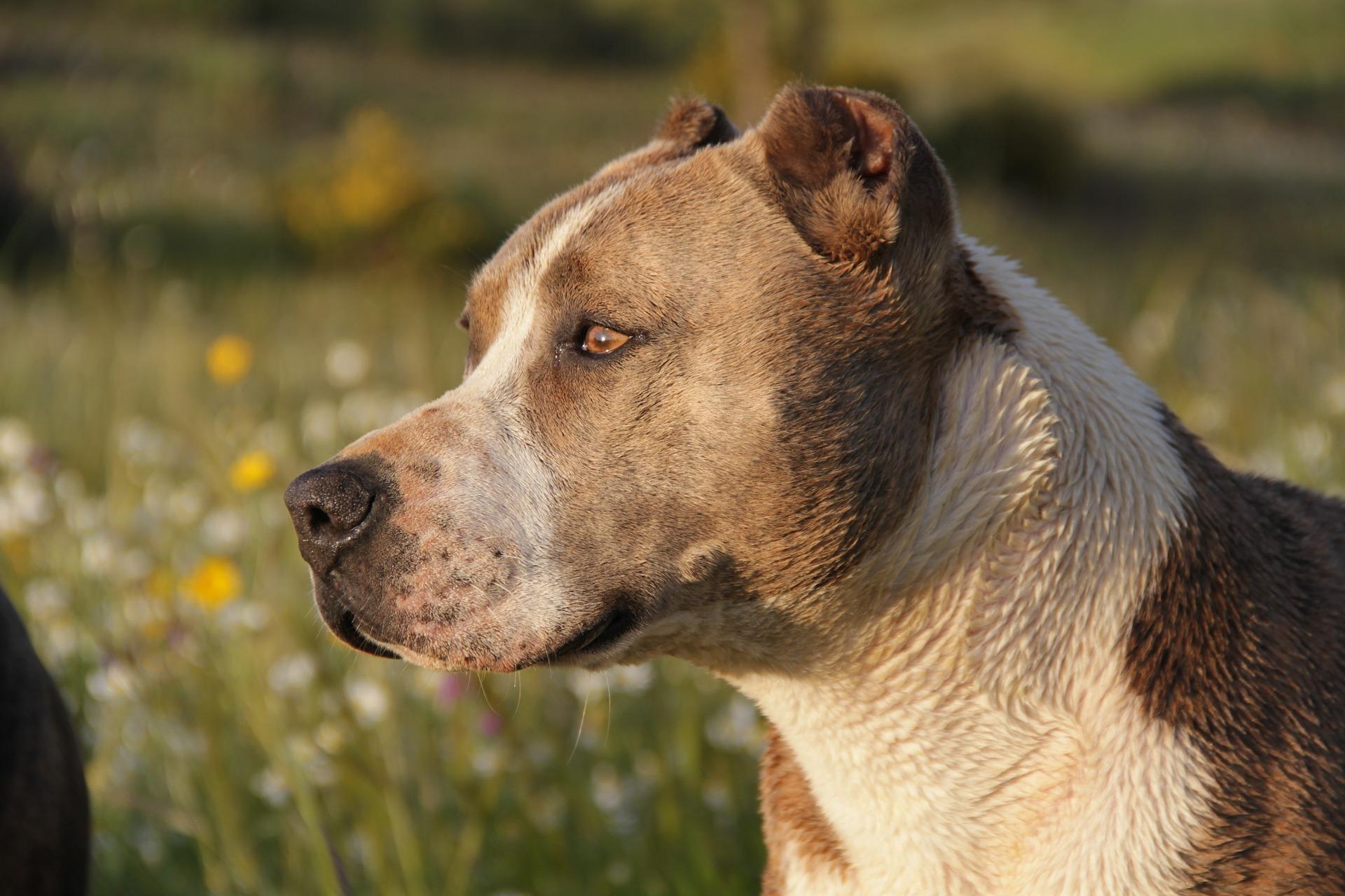 הכלב הכי מסוכן בעולם